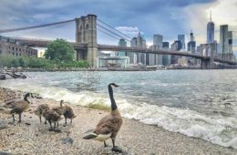 Discover Brooklyn :    Brooklyn Heights,Dumbo,Williamsburg